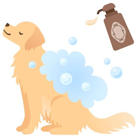 Illustration of a golden retriever being washed with shampoo