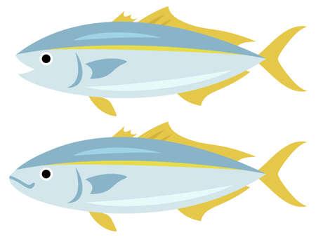 Illustration of two Buri (Japanese yellowtail, amberjack) 일러스트