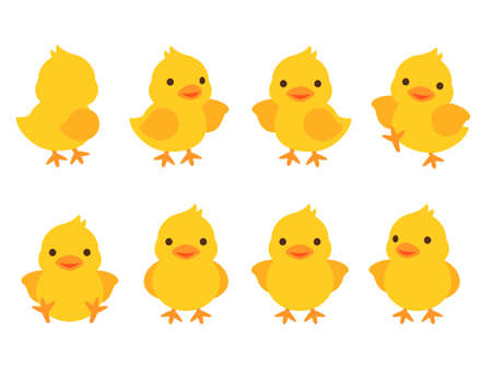 Illustration set of chicks in 8 different poses(backward, raise one hand, introduce, dance, sit, face, raise both hands, guide) Ilustración de vector