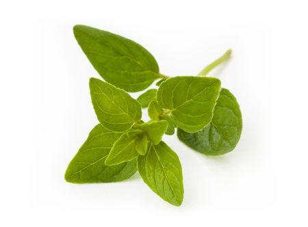 sprig: Fresh oregano sprig