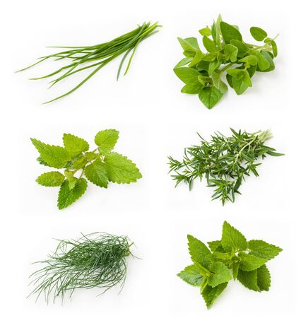 herb garden: Collection of fresh herbs - chives, oregano, lemon balm, savory, dill, peppermint