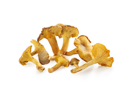 Chanterelle mushrooms isolated on white background. Girolle mushrooms stack.