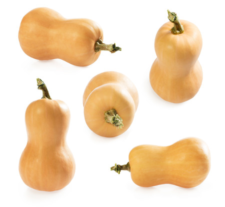 Set of butternut squash isolated on white background. Autumn pumpkin.