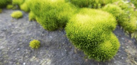 Green vibrant moss on the gray rock. Soft and blurred image ideal for backgrounds with copy space.