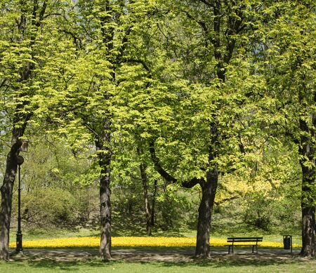 Vibrant spring colour of city park. Green trees and yellow flowers with path and bench. Banque d'images