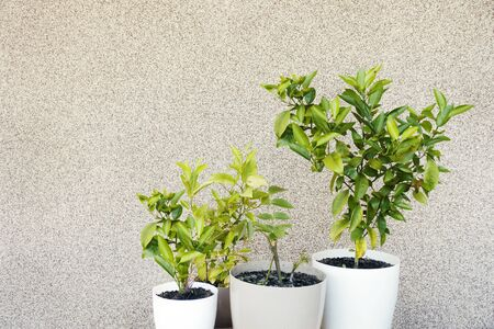 Potted plants on mineral plaster wall. Frame background with copy space.