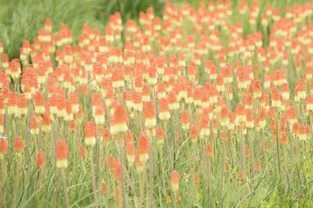 sapporo: Flower field in Sapporo Stock Photo