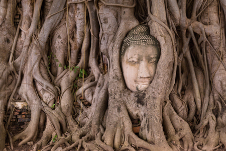 Buddha face in the tree Stock Photo
