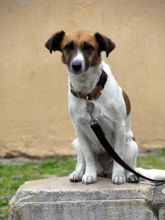 perro triste: Sad perro