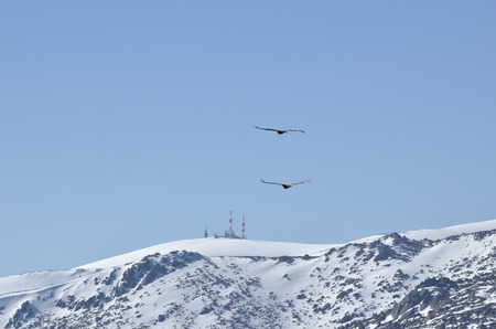 issuer: Flight of eagles with radio antenna and tv background
