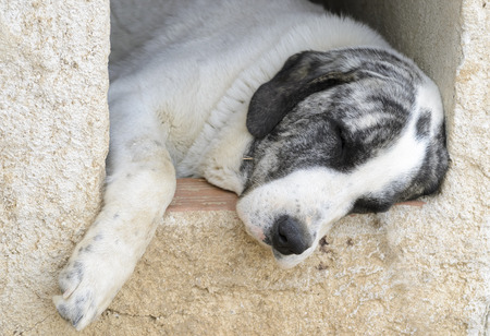 affectionate action: Beautiful dog is having a nap, in her hut. Stock Photo