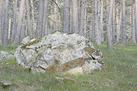 large rock: Singular and large rock with moss, located at forest Stock Photo
