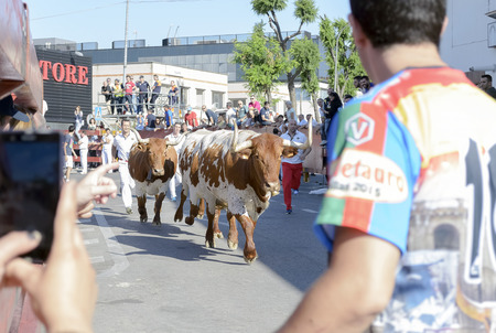 fairs: TORREJON DE ARDOZ, SPAIN - JUNE 21th 2015: Unknown people are watching the running of the bulls, during fairs of Torrejon de Ardoz, on June 21th 2015. Editorial