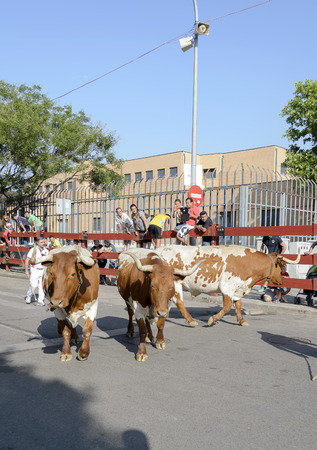 fairs: TORREJON DE ARDOZ, SPAIN - JUNE 22th 2015: Unknown people are watching the running of the bulls, during fairs of Torrejon de Ardoz, on June 22th 2015. Editorial
