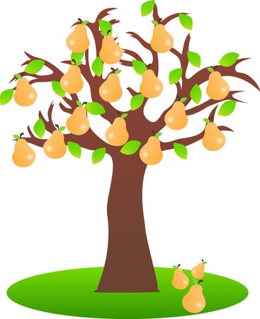 pear tree: Vector illustrated pear tree on white background. Illustration