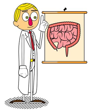 Doctor explaining the intestine. Vector cartoon character, health illustration. Illustration