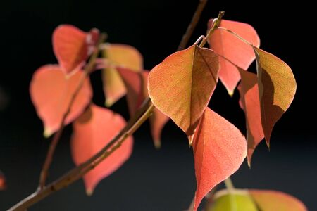 Beautiful colors of autumn leaves