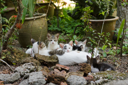 Kittens gather together resting with their mom photo