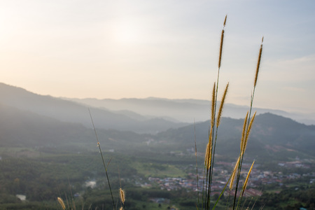 View of sunrise shining behind mountain from Bukit Broga, Selangor with wild fern foreground. It is a tourist attraction to hike especially on weekends. Shallow DOF. Standard-Bild