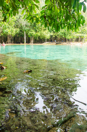 View of beautiful water at Emerald Pool, Krabi. Leaves hanging over water during sunny day.