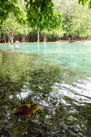 Selective focus on leave submerged in tropical water pond at Emerald Pool, Krabi during bright day. Standard-Bild