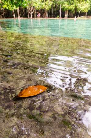 Selective focus on leave submerged in tropical water pond at Emerald Pool, Krabi during bright day. Stock Photo