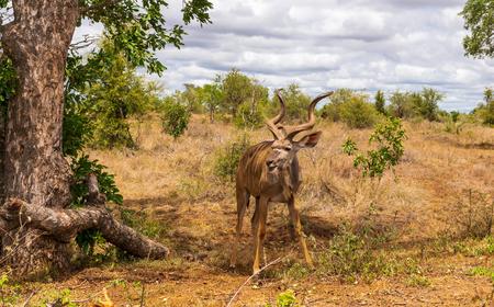 kudu standing on top of a dirt field