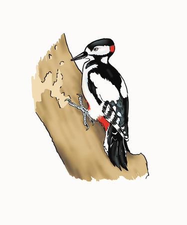 Little woodpecker on a bole.