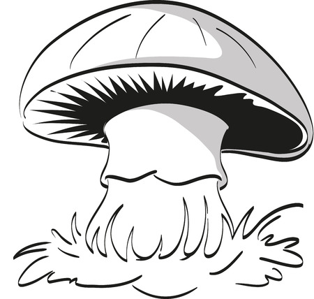 stipe: Lonely mushroom on a white background. Coloring page.