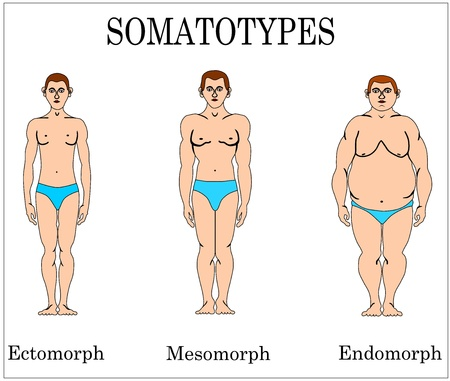 Three major somatotypes  No gradients