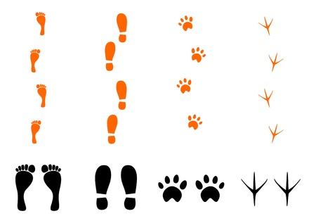 トレース足、靴、動物、白い背景の上の鳥のシルエット。