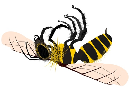 Dead honey bee Vector