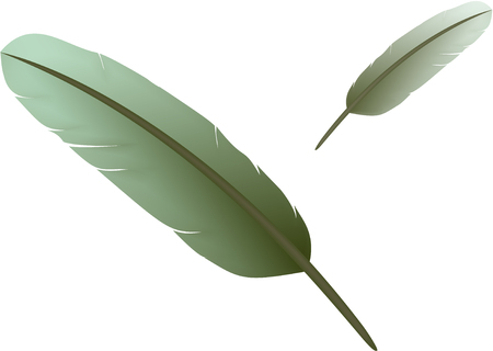 Two feathers of bird  Vector