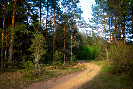 curving: Curving road in forest in evening during sunset Stock Photo