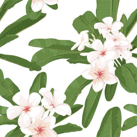 Plumeria seamless pattern. fond d'écran exotique tropical avec plumeria. Realistic illustration florale. dessin vectoriel botanique avec plumeria pour spa fond.