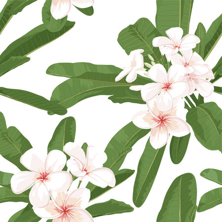 Plumeria seamless pattern. Tropical exotic wallpaper with plumeria. Realistic floral illustration. Botanical vector design with plumeria for spa background.