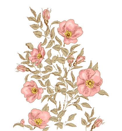 dog rose: Dog rose background. Hand drawn illustration with dog rose. Botanical sketch vector. Elements for invitation card with dog rose.