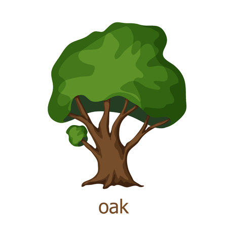 Oak tree. Oak tree illustration. Cartoon oak. Landscaping design elements. Park and garden oak isolated on white. Summer oak tree. Vectores