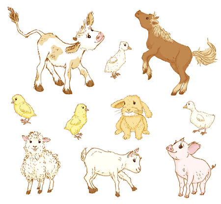 baby lamb: Farm baby animals. Farm baby animals set. Farm baby animals  illustration. Sketch of cute farm baby animals. Cartoon farm baby animals.Calf, foal, lamb, goat, chicken, pig, goose,