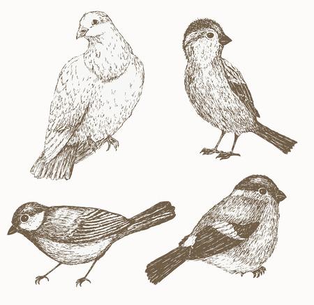 titmouse: Bird: sparrow, titmouse, bullfinch, dove. Bird set.  bird. Sketch of sparrow and order bird. illustration of  sparrow and order bird. Bird vintage collection.