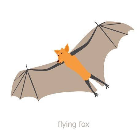 fauna: Flying fox. Cartoon character. Australian flying fox soars. Zoo illustration. The fauna of the Australian continent. Wild animal. Cute bat. Illustration