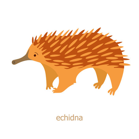 endemic: Echidna. Cartoon character. Australian endemic. Zoo illustration. The fauna of the Australian continent. Wild animal. Cute echidna. Symbol of country. Illustration