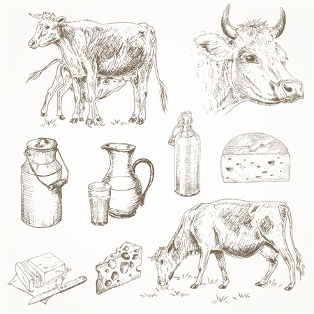 milk cans: Dairy cattle farm sketch set. Cow eating grass, cute calf drinks milk, cows head, milk products. Milk cans, bottle, cheese, butter. Dairy cattle farm  illustration. Drawing dairy farm