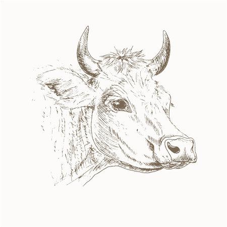 Koehoofd schets. Melkvee illustratie. Tekening koe hoofd. Koe hoofd geïsoleerd op wit. Farm huisdier.