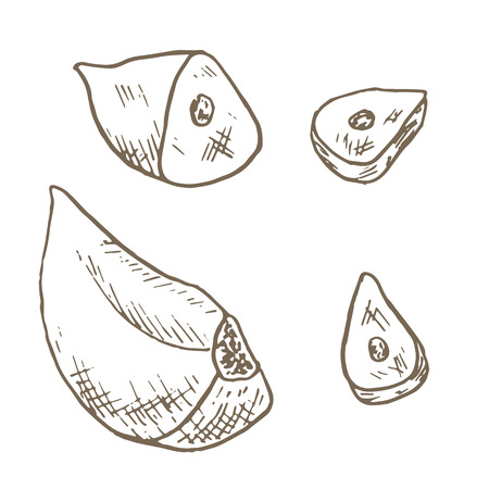 garlic clove: Garlic clove set. Sketch garlic clove sliced. Hand drawn garlic clove and slice. Vector garlic clove illustration. Cut organik vegetable set. Vegetarian and vegan food. Stock Photo