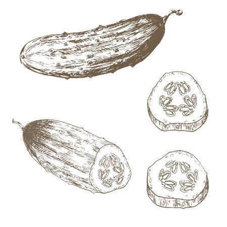 Cucumber slice set. Sketch cucumber slice. Hand drawn cucumber slice and slice. Vector cucumber slice illustration. Cut organik vegetable set. Vegetarian and vegan food.