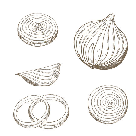 aros de cebolla conjunto. rodaja de cebolla boceto. Dibujado a mano aros de cebolla y rebanada. Vector ilustración rodaja de cebolla. Cortar Vehículo del conjunto Organik. Vegetarianos y veganos alimentos.