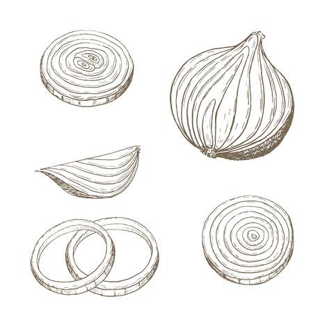 Onion  rings set. Sketch onion slice. Hand drawn onion  rings and slice. Vector onion slice illustration. Cut organik vegetable set. Vegetarian and vegan food. Stok Fotoğraf
