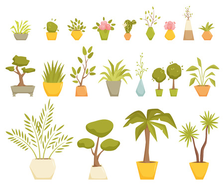 myrtle: Plants in pot set. Interior home and office potted plants. Houseplant cartoon vector illustration. Interior decoration. Flowerpot drowth and gardening. Dracaena, Tsukasa, palm, myrtle, cactus, violet