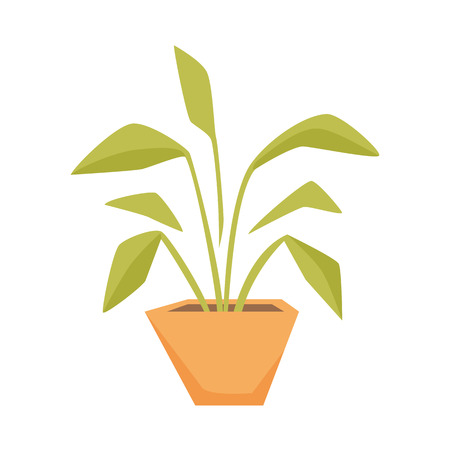 home gardening: Drimiopsis, Dieffenbachia, Syngonium in pot. Interior home and office potted plant. Houseplant cartoon vector illistration. Interior decoration. Flowerpot drowth and gardening.